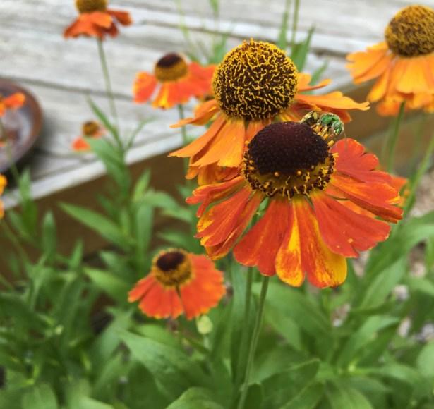 Queen's Park Pollinator Habitats