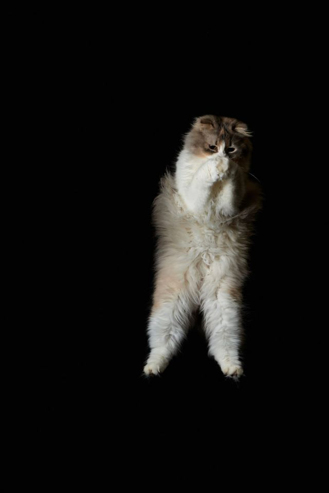 Jumping Cat 16