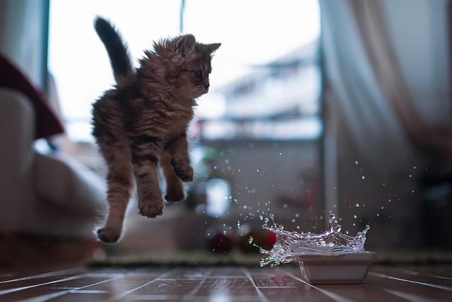 Jumping Cat 2