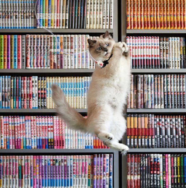 Jumping Cat 20
