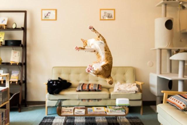 Jumping Cat 3