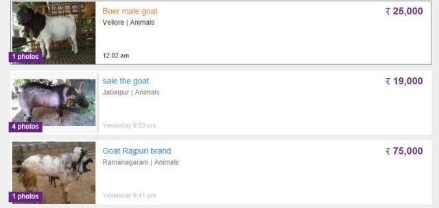 Goat Ads on OLX