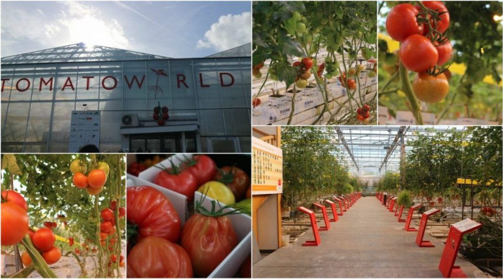 Collage Tomatoworld