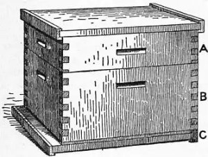 Drawing of a 1911 Britannica Bee Langstroth Hive. A successful design that still has its hive problems.