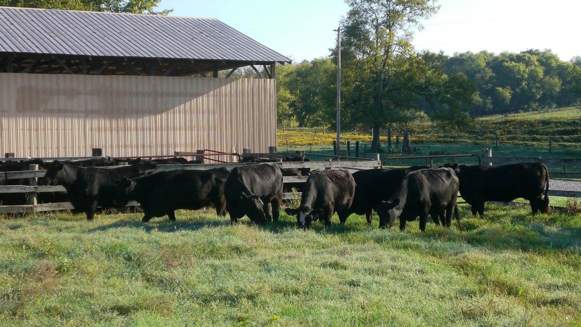 Cow Efficiency Topic of Cattlemen's Meeting