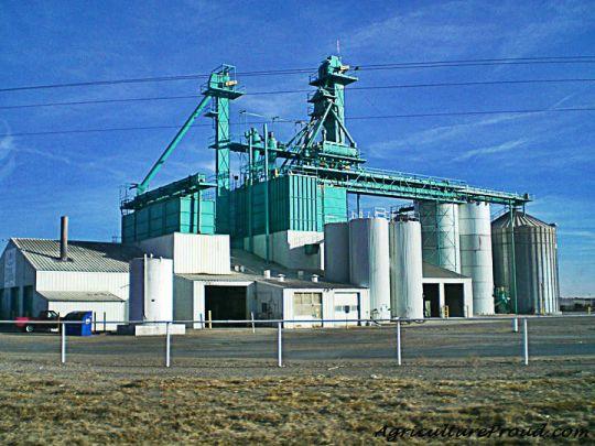 cattle feedlot corn mill