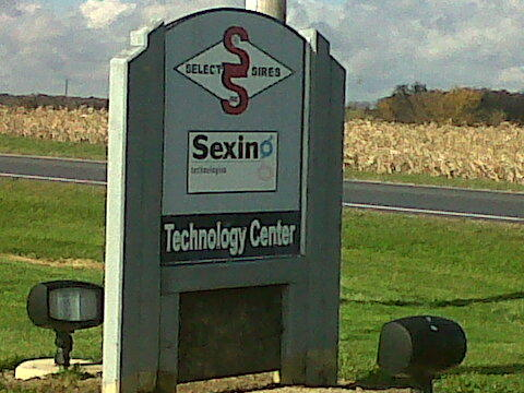bull semen technology sex sorting select sires