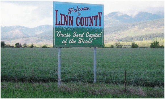 My home county, Linn County, produces the majority of the world's annual ryegrass, often used for pastures/forage, cover crops and erosion control.