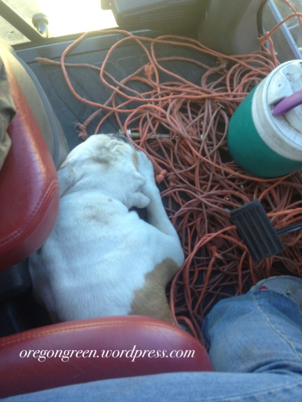 marie bowers dog in tractor