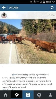 calf roadside instagram