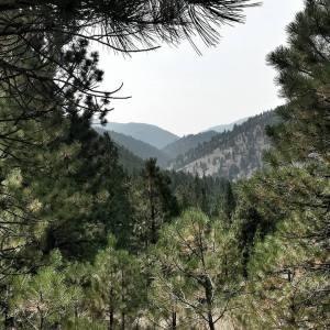 montana public lands forest rangeland ecology