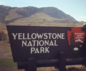 Yellowstone National Park Bison Management