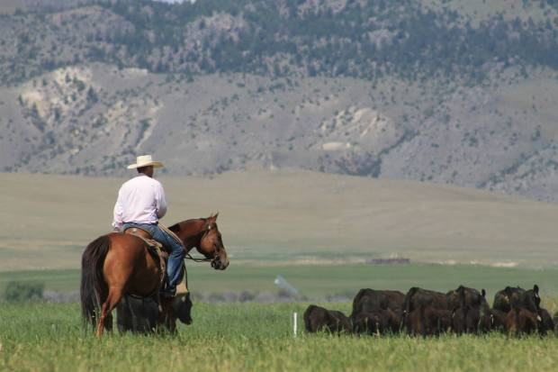 Check out more photos from my visit to the La Cense ranch via Montana Stockgrowers on Facebook