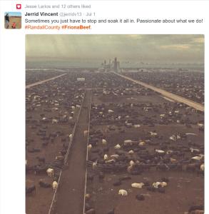 friona beef feedlot tweets