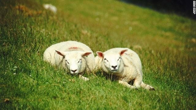 help farmers help farm animals cnn eatocracy