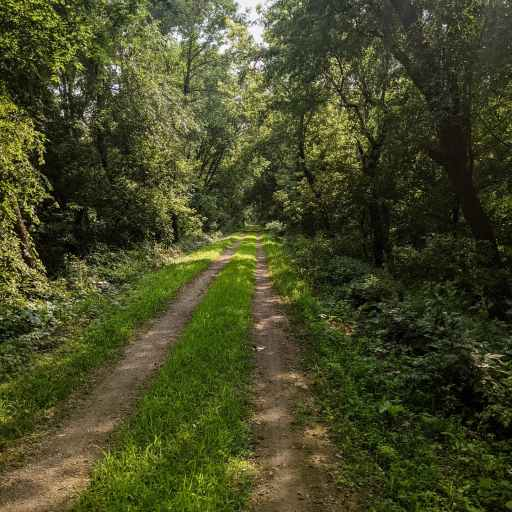 badger trail 100