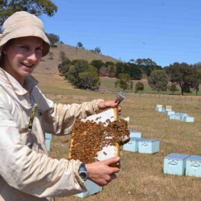 BeeHappy Imker Felix Mrowka, der Glückliche Imker posiert mit einer Bienenwabe in Australien