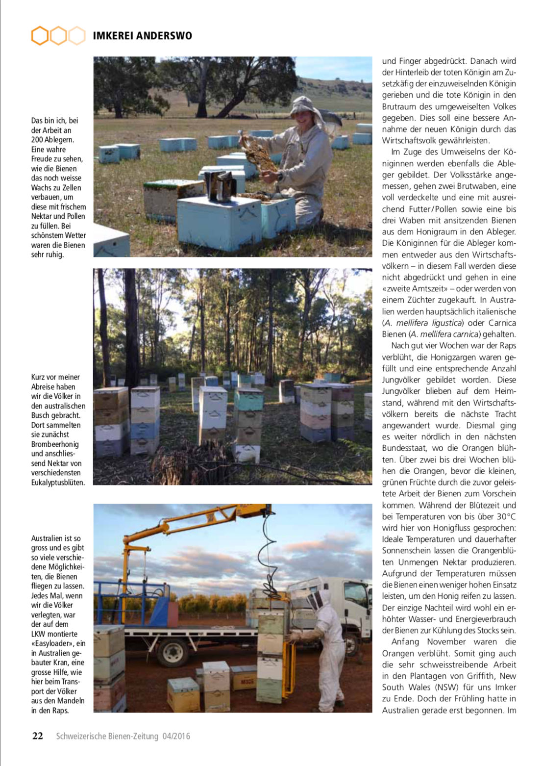 Artikel Imker auf Weltreise-erste Station: Australien Seite 3 Schweizerische Bienenzeitung Felix Mrowka
