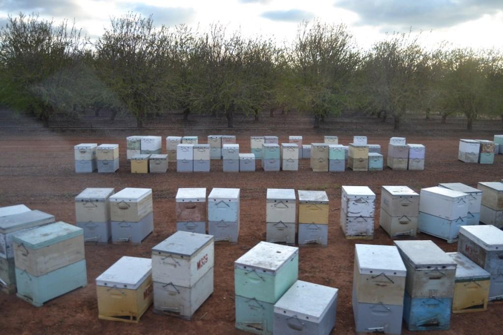 Bienenstand zur Mandelbestäubung in Australien