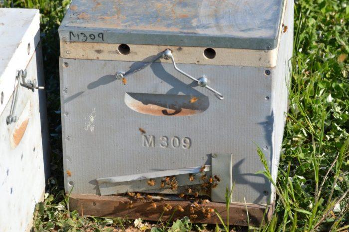 Eine australische Langstrohtbeute mit Fluglochverschluss und Springbügel