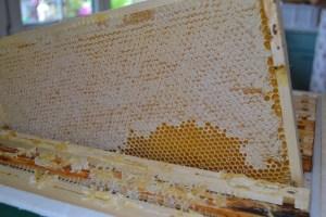 komplett verdeckeltes Honigraehmchen Deutschnormalmaß
