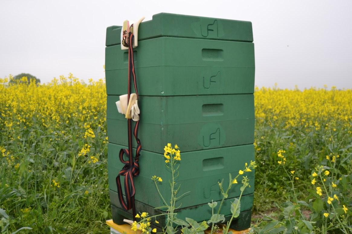 Ein Bienenvolk im Rapsfeld mit 3 Zargen