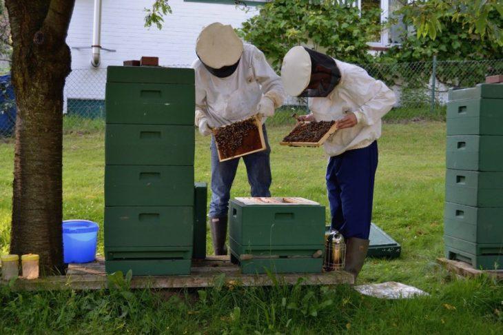 Zwei Imker betrachten Bienenwaben