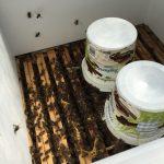 Bienen Füttern mit einem Futtereimer