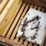 Futterteig zum Bienen Füttern liegt in einer Zarge
