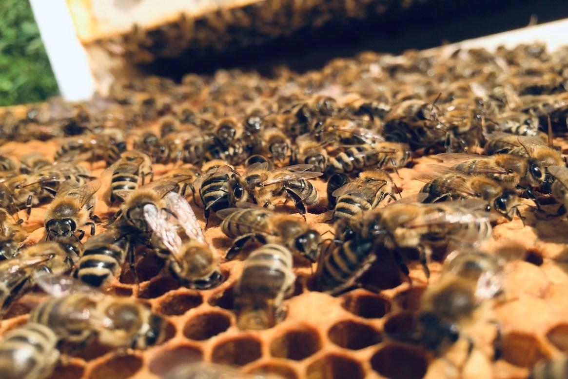 Honigbienen optimal betreuen lernst Du beim BeeHappy Neuimker*in Kurs