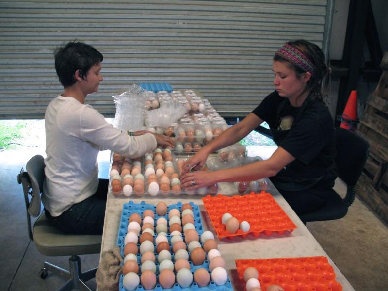 egg shares