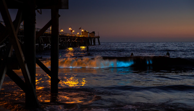 """Bioluminescence plankton"" by Cameron Photo is licensed under CC BY 2.0"