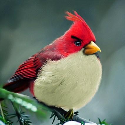 Angry Birds par Mohamed Raoof