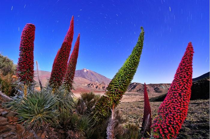 Las flores del volcan © Francisco Mingorance