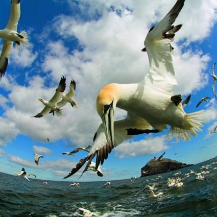 Une mini caméra portée par des oiseaux pour découvrir leur quotidien