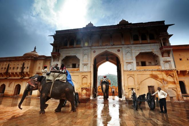 The entrance of elephants