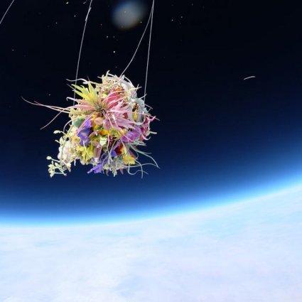 Plants in Stratosphere / Exbiotanica