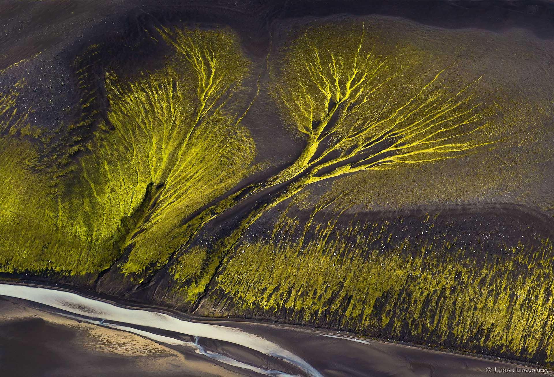 Baum der Wildness - Aerial Island - Lukas Gawenda