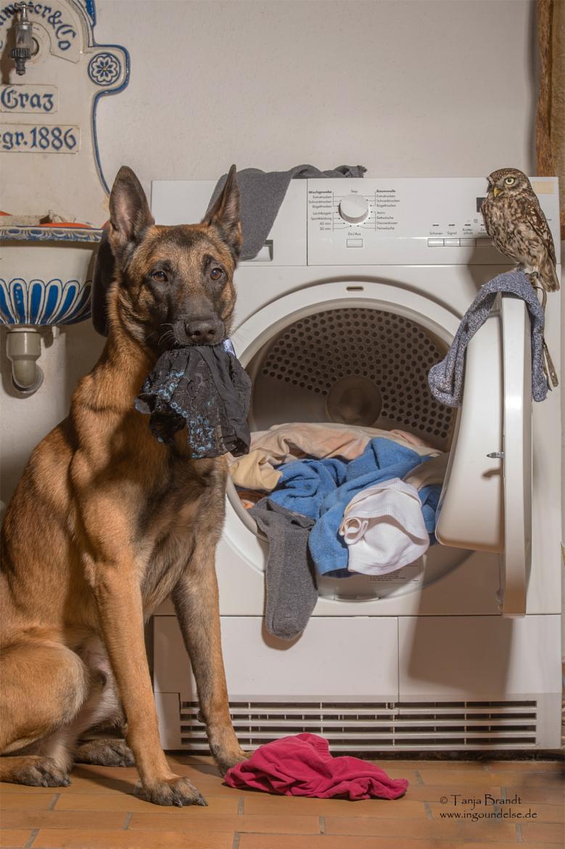 Friendship Owl Dog 10714382