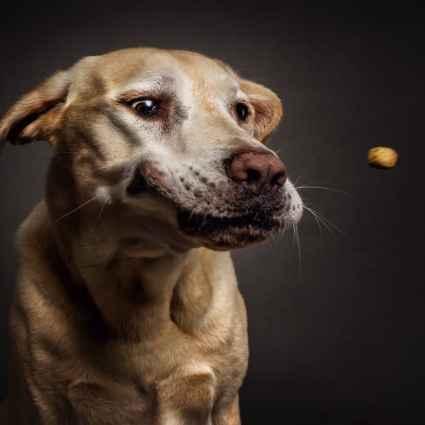 Des photos amusantes de chiens entrain d'attraper de la nourriture / Christian Vieler
