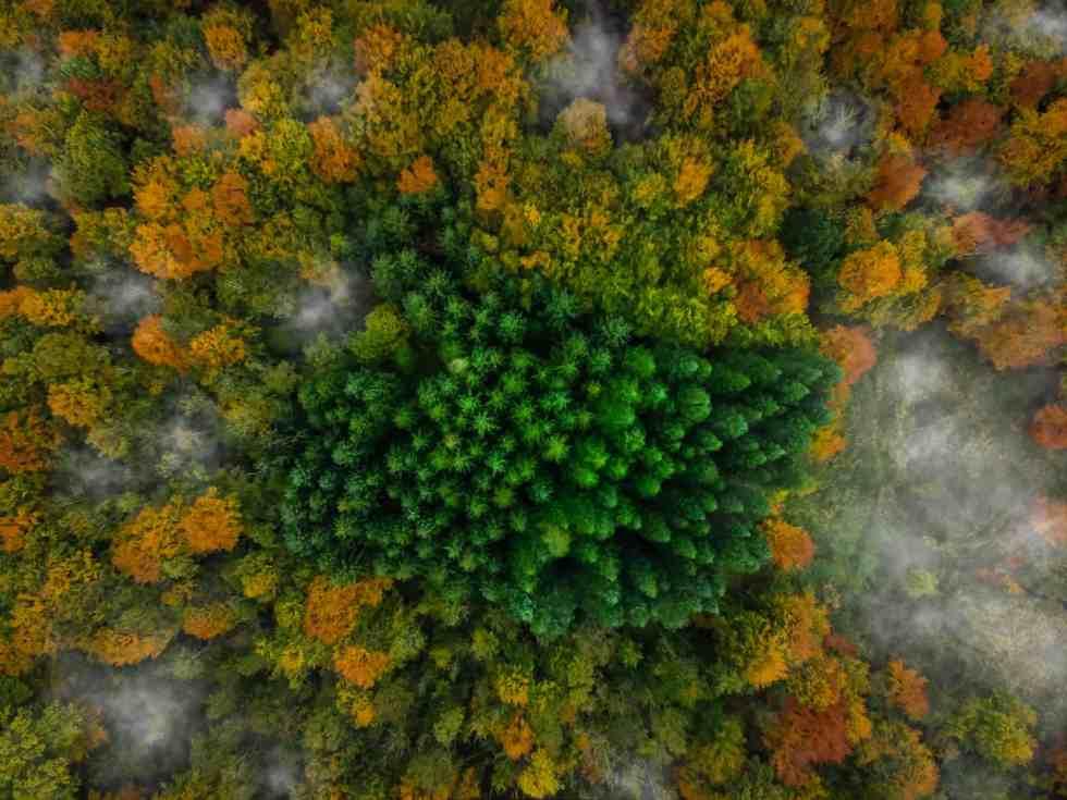 Forêt Kalbyris, Danemark (c) Michael B. Rasmussen