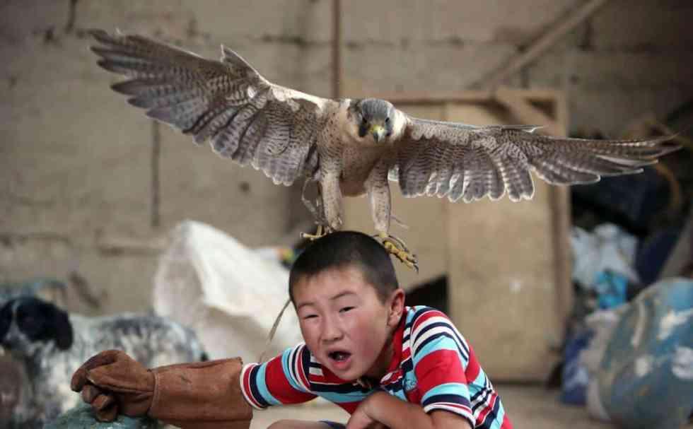 Un bébé faucon atterrit sur la tête d'un enfant