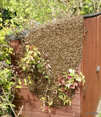 the swarm landed on my neighbours bike shed