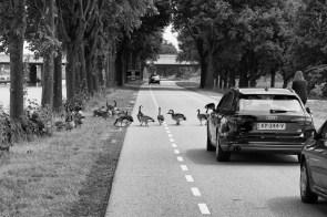 gewoon in alle rust even het verkeer stilleggen
