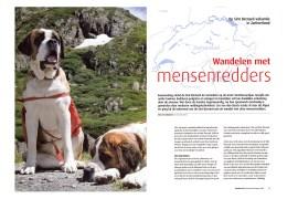 Wandelen met de Sint Bernardhond op de Bernhardpas