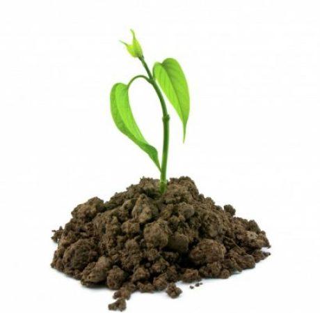วิธีจัดการกับเมล็ดพันธุ์พืช ให้อยู่รอดก่อนกลายเป็นต้นไม้ที่แข็งแรง 2