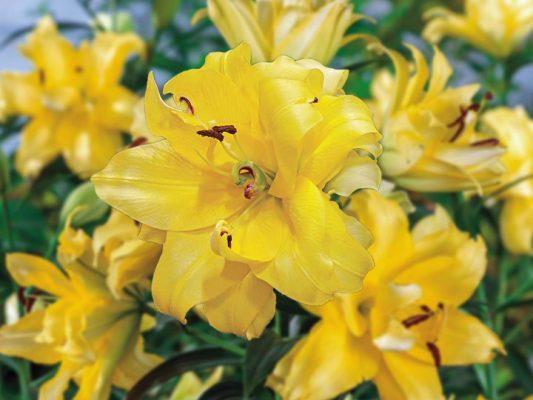 คุณเครียดหรือไม่? ลดความเคลียดด้วยการบำบัดจากกลิ่นหอมของดอกไม้ได้ 2