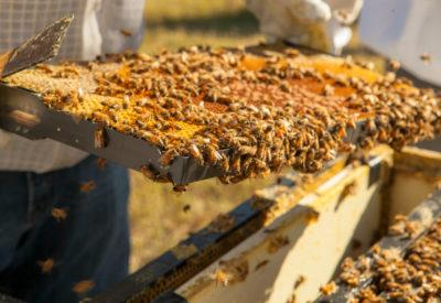 BeeLoved Trading Beekeeping Hive Frame