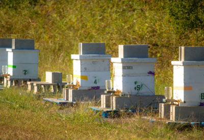 beeloved-trading-bee-hives-tulsa
