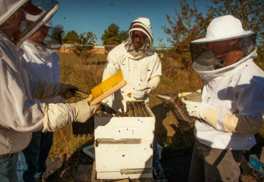 beeloved-trading-students-bee-keeping